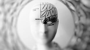 Навчитися вчитися: Застосування принципів розуміння роботи мозку для підвищення ефективності роботи учнів